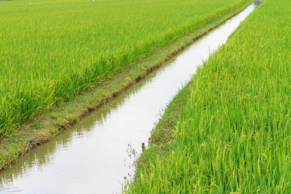 IrrigationGamePractitioners